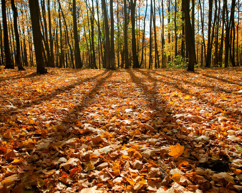 Autumn forest scene royalty free stock image
