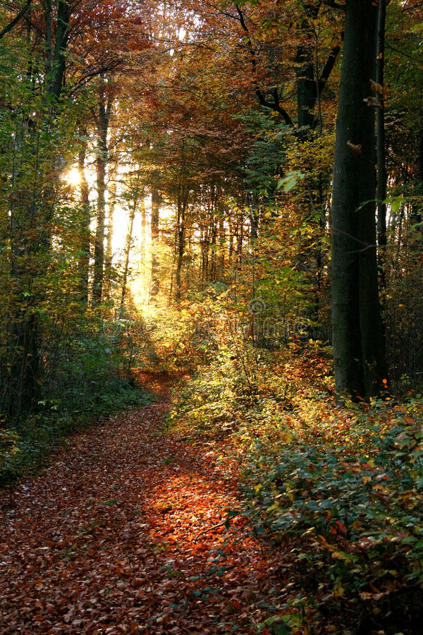 Autumn forest scenery royalty free stock images