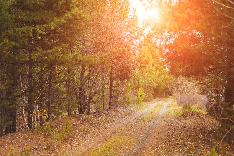 Autumn forest scenery with rays of warm light illumining the gold foliage and a footpath leading into the scene stock image