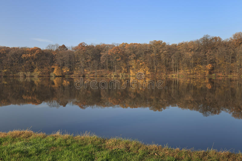 Download Autumn forest shoreline stock image. Image of forest - 17341633
