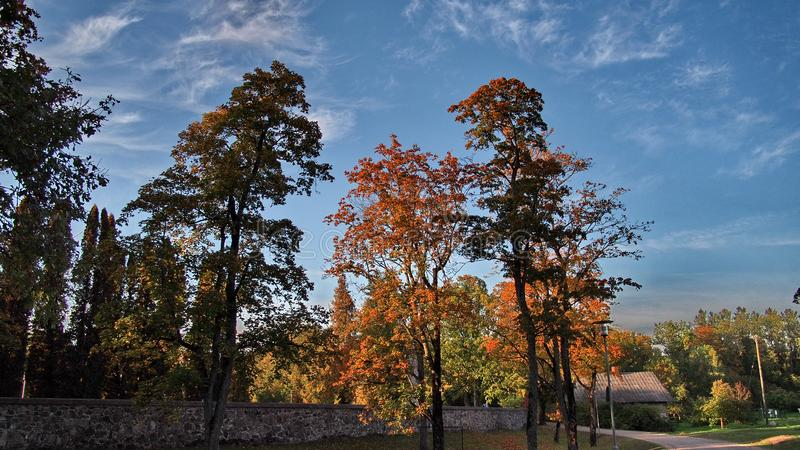 Autumn forest and sky royalty free stock image