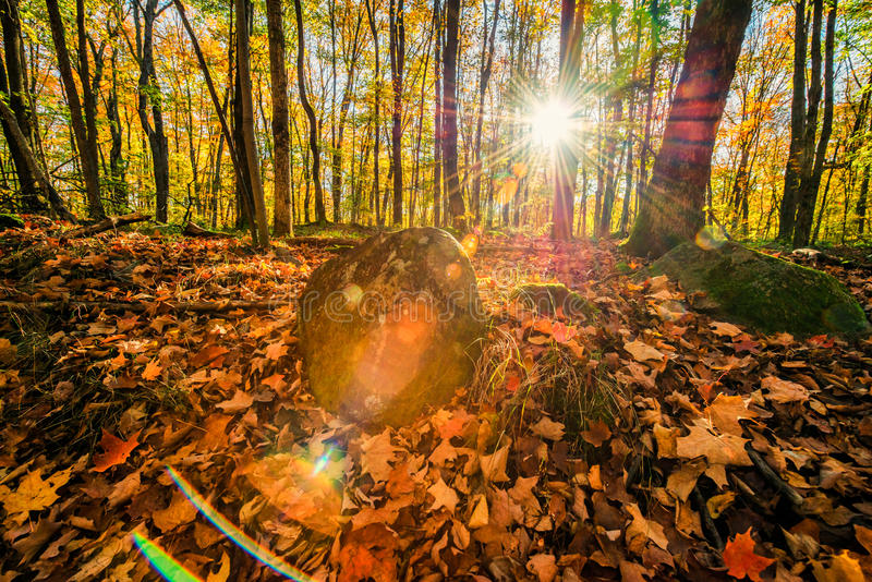 Autumn Forest Solar Flare fotografia de stock