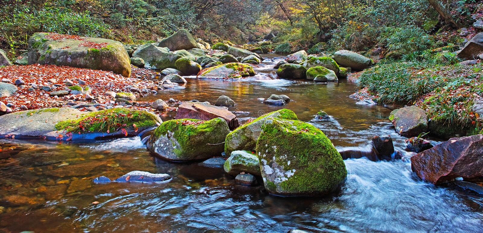 Download Autumn Forest Stream Stock Images - Image: 13387794