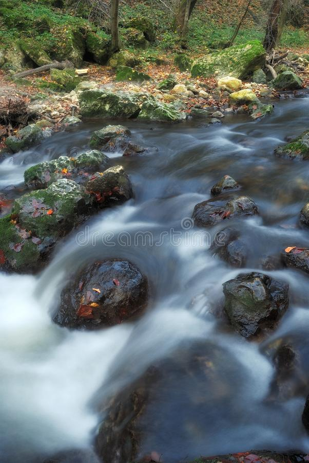 Autumn forest stream royalty free stock images