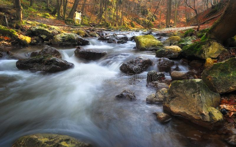 Autumn forest stream royalty free stock image