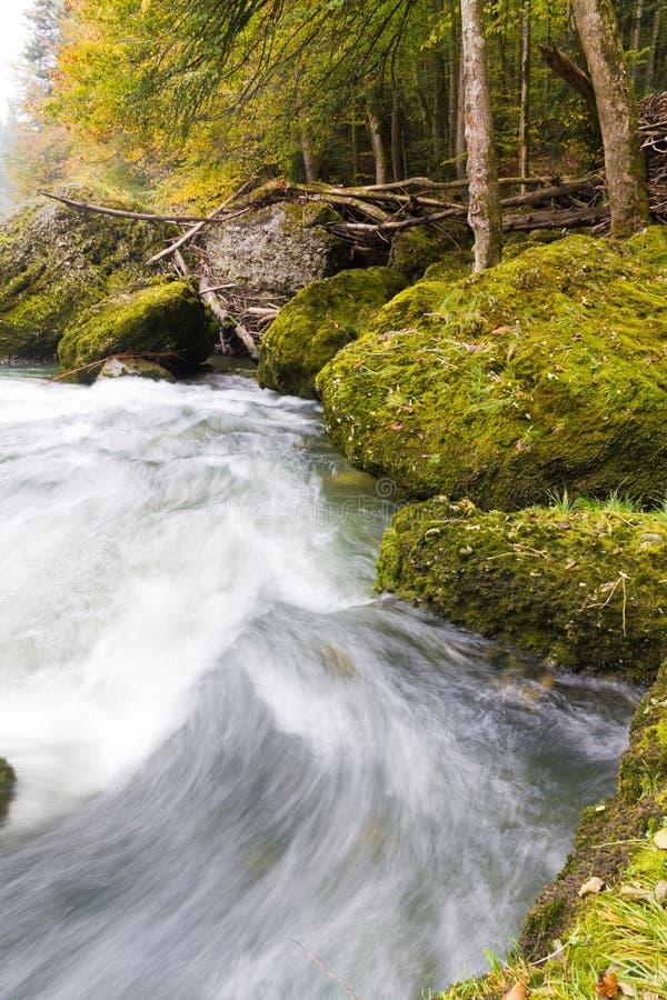 Autumn forest stream stock image