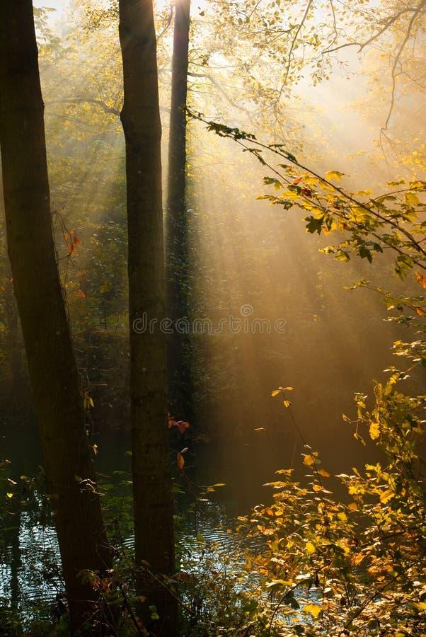 Autumn forest sun rays stock photos