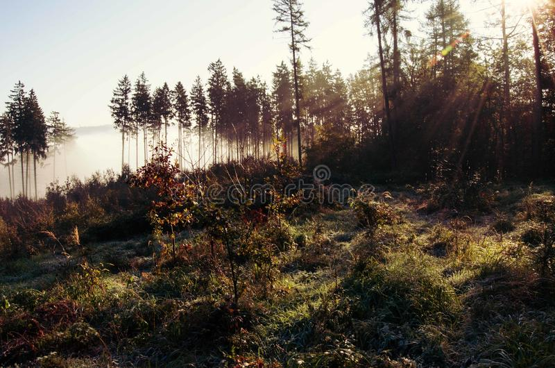 Download Autumn Forest In Sunny Morning Stock Photo - Image of forest, sunlight: 83716862