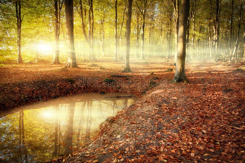 Autumn forest sunrise with pond reflection. Stunning sunrise in autumn forest with natural pont reflection. Misty morning in an enchanted forest stock images