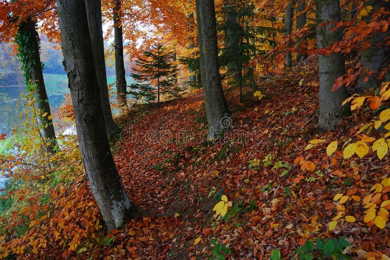 Autumn forest trees stock photo