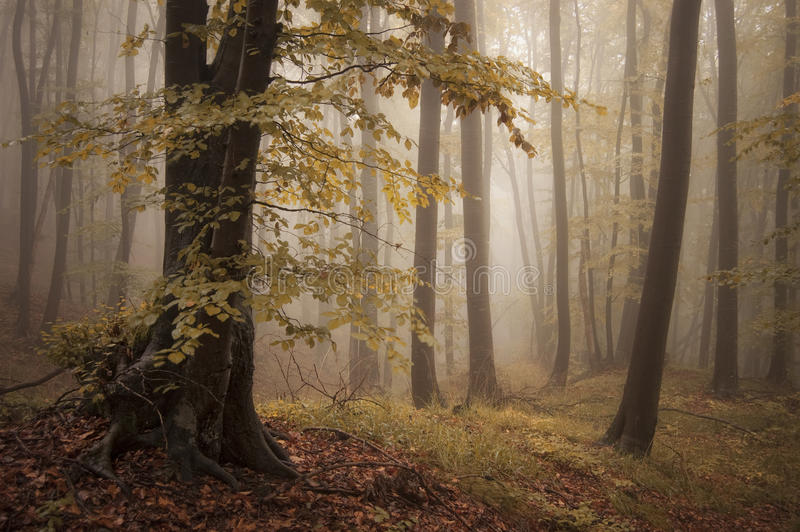 Autumn forest and trees with colorful leafs stock images