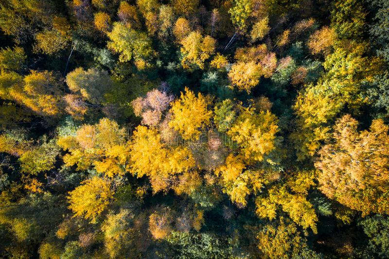 Autumn forest. Trees with colorful leaves from above. Autumn aerial background. Fall nature royalty free stock image