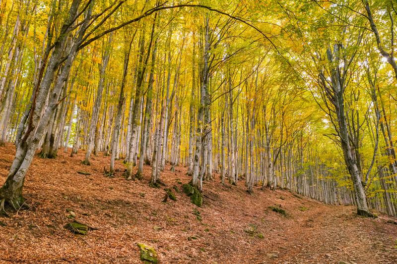 Autumn forest trees landscape royalty free stock photo