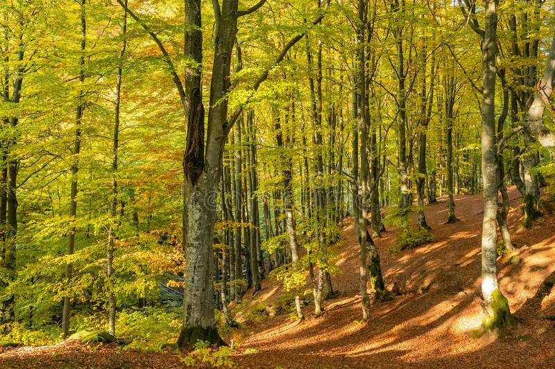 Autumn forest trees landscape stock photos