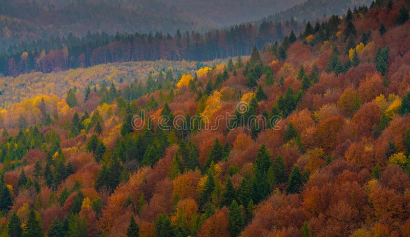 Autumn forest trees in the mountains panorama trees in the mountains royalty free stock images