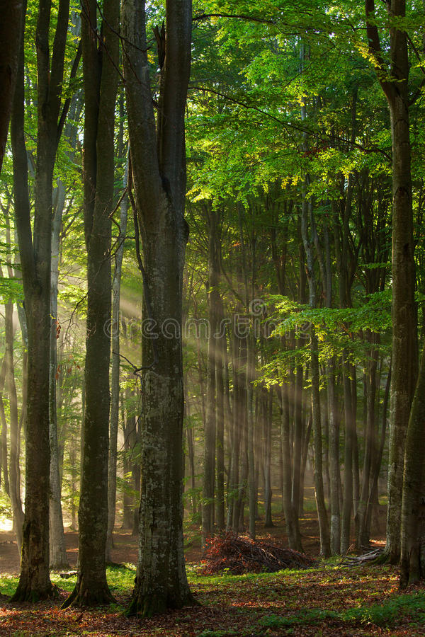 Autumn forest trees. nature green wood sunlight backgrounds. royalty free stock images