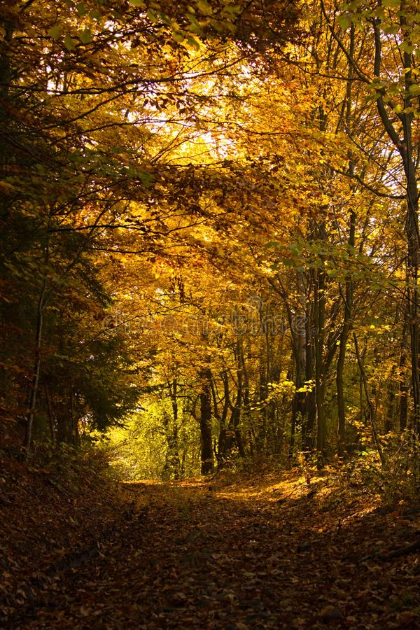 Autumn Forest Tunnel lizenzfreie stockbilder