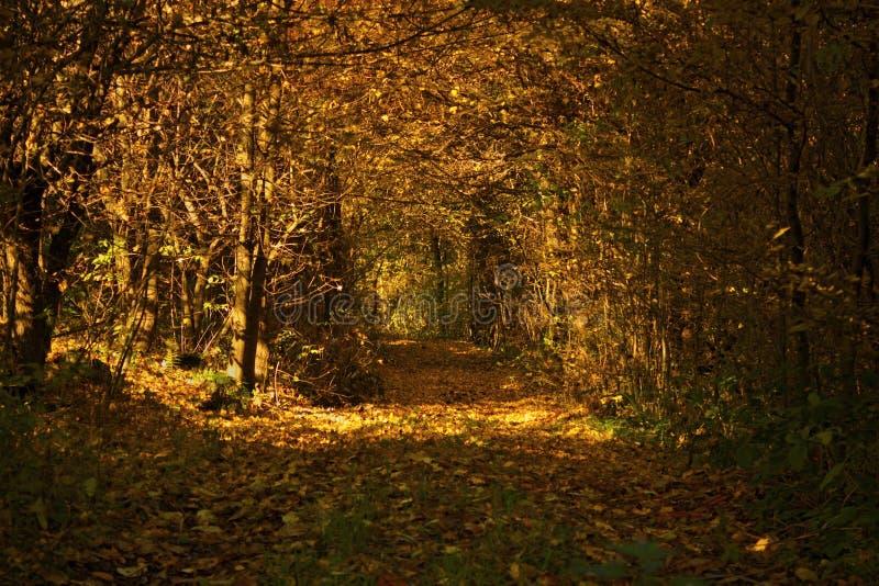 Autumn Forest Tunnel stockfotografie