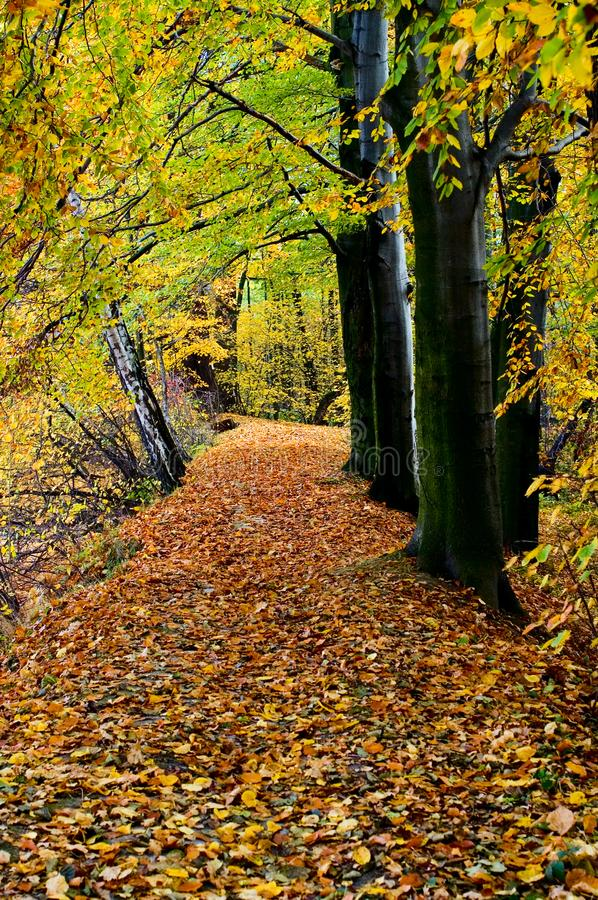 Autumn forest, vertical royalty free stock photography