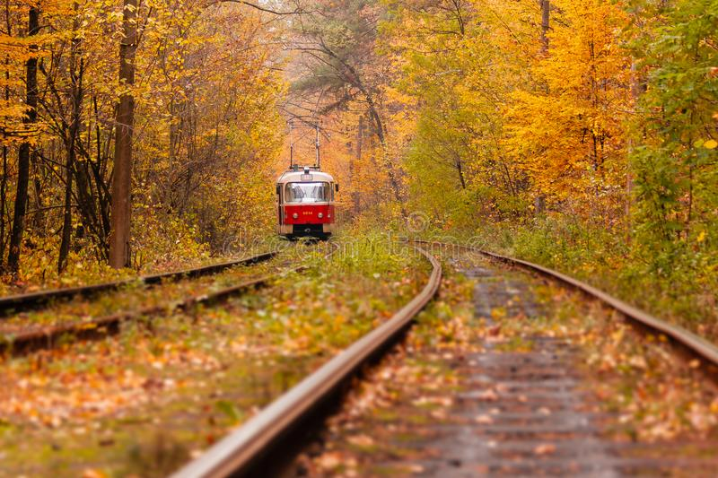 Download Autumn Forest Among Which Goes A Strange Tram Stock Image - Image of color, outdoor: 108845379
