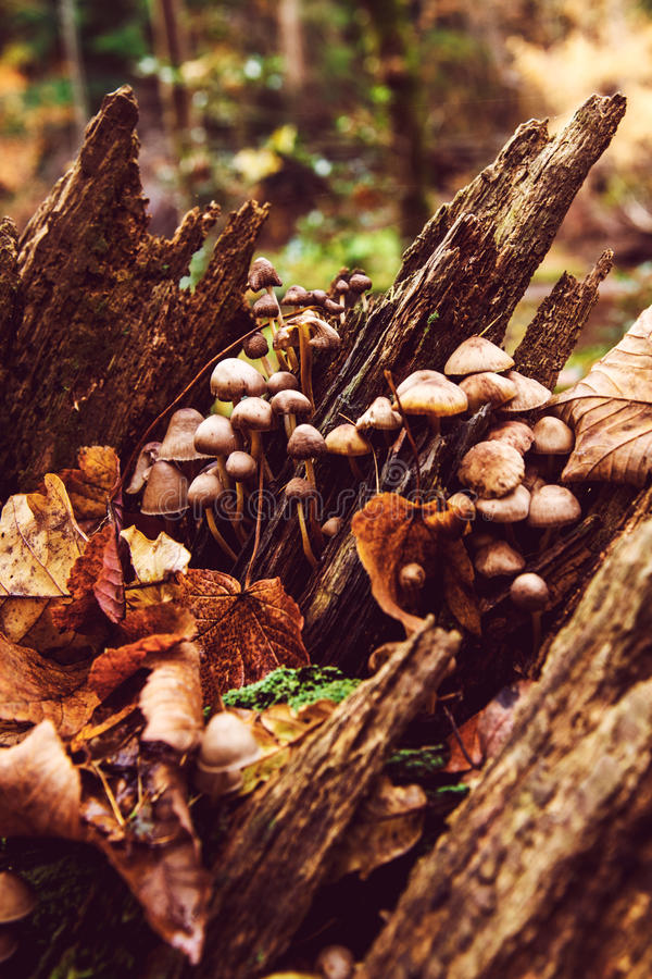 Autumn forest wild mushrooms royalty free stock photography