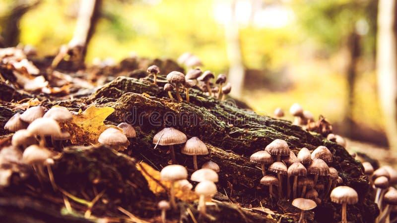 Autumn forest wild mushrooms stock photo