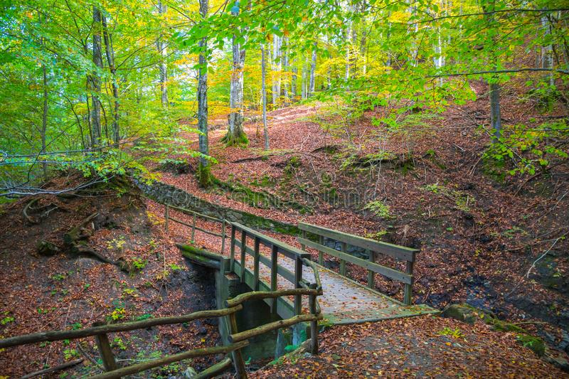 Autumn forest with wood bridge over creek in beeches forest, Italy stock image