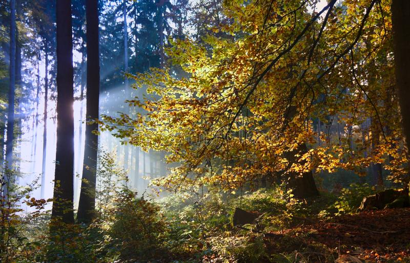 Autumn forest in the evening sun stock images