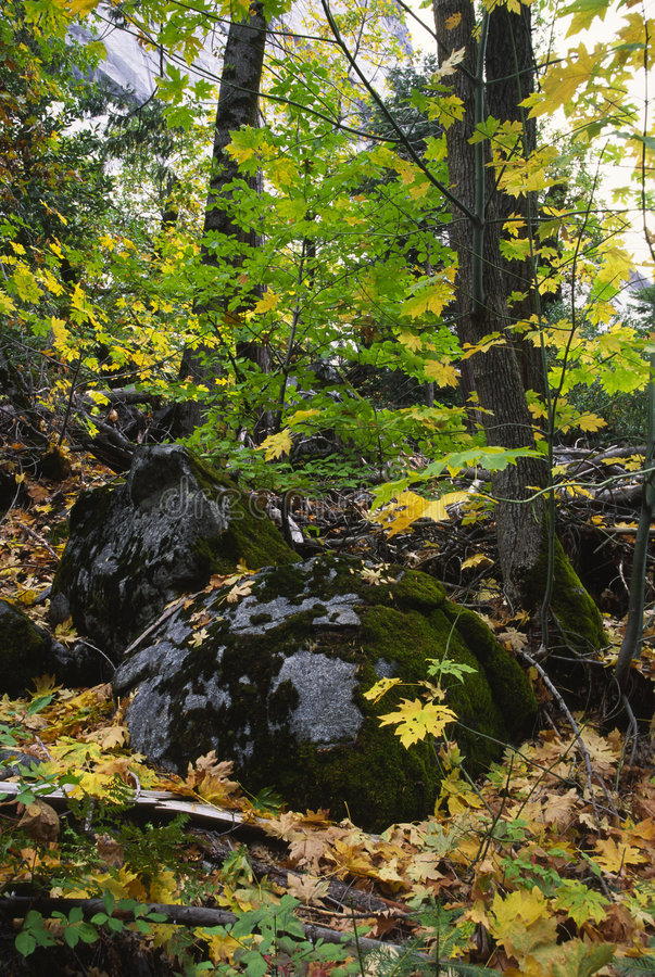 Download Autumn Forest In Yosemite Valley Stock Image - Image: 4301291