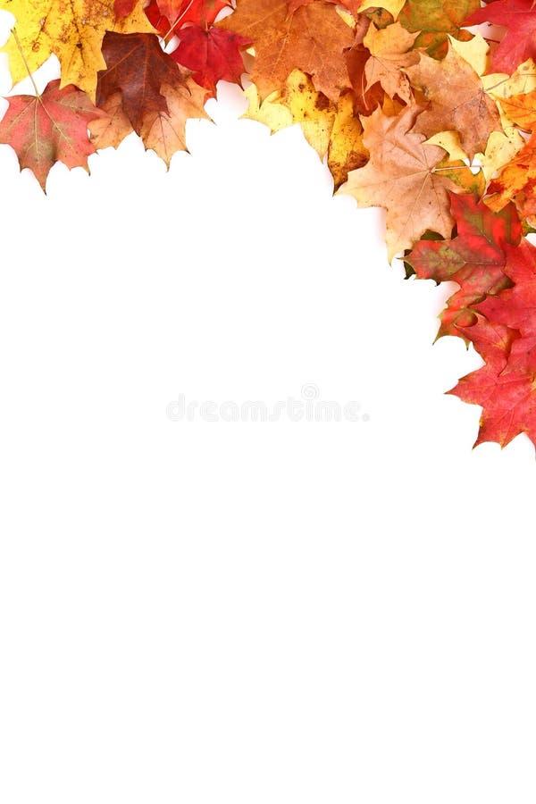 Free Autumn Frame Royalty Free Stock Photography - 16256247