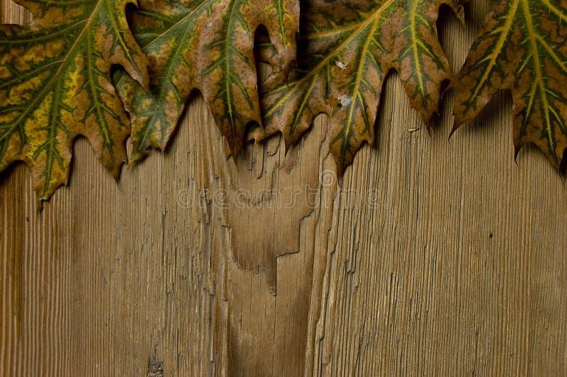Download Autumn frame stock image. Image of border, foliage, maple - 6736583