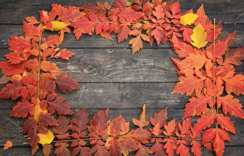 Autumn frame of colored leaves on a natural wood background.  stock images