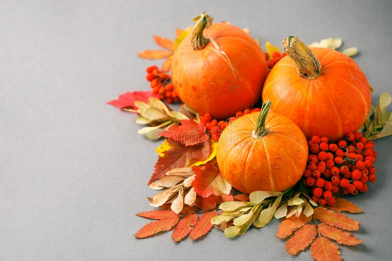 Autumn frame with dry leaves, natural and decorative pumpkins composition on gray background, seasonal halloween, thanksgiving royalty free stock image
