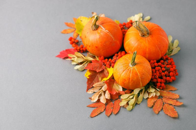 Autumn frame with dry leaves, natural and decorative pumpkins composition on gray background, seasonal halloween, thanksgiving stock photography