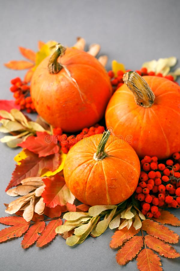 Autumn frame with dry leaves, natural and decorative pumpkins composition on gray background, seasonal halloween, thanksgiving royalty free stock photography