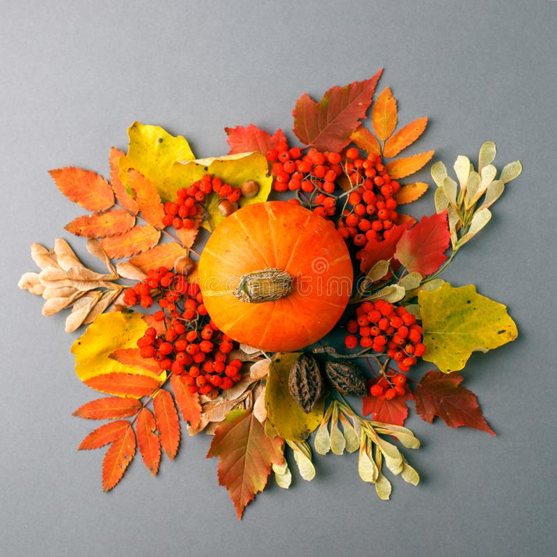 Autumn frame with dry leaves, natural and decorative pumpkins composition on gray background, seasonal halloween, thanksgiving royalty free stock images