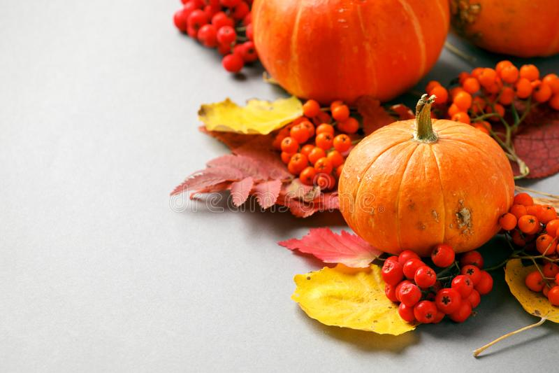 Autumn frame with dry leaves, natural and decorative pumpkins composition on gray background, seasonal halloween, thanksgiving stock images