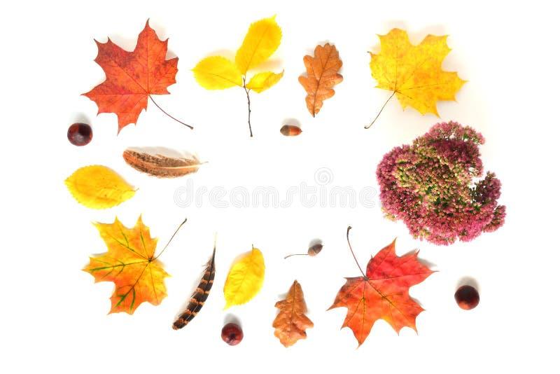 Autumn Frame en blanco imágenes de archivo libres de regalías