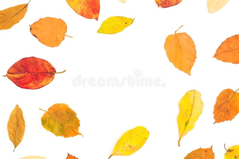 Autumn frame made of colorful fall tree leaves on white background. Flat lay, top view royalty free stock photography