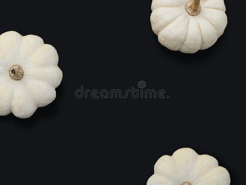 Autumn frame made of white pumpkins isolated on black background. Fall, Halloween and Thanksgiving concept. Modern. Styled stock flat lay photography, top view royalty free stock photo