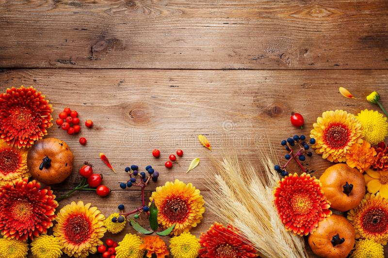 Autumn frame with orange and yellow gerbera flowers, decorative pumpkins, wheat ears.Beautiful nature composition for Thanksgiving royalty free stock photo
