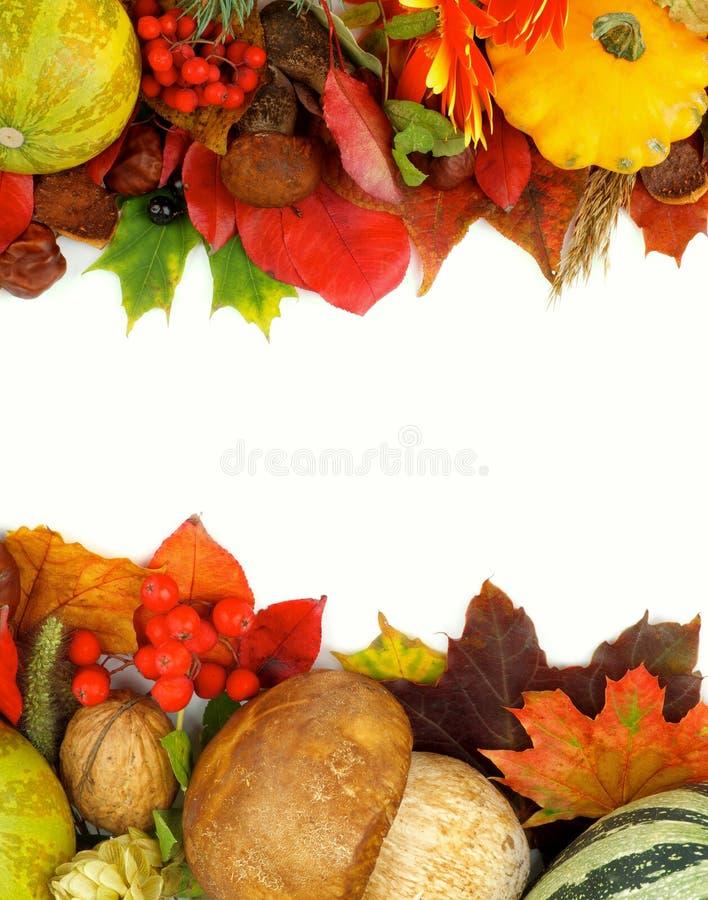 Autumn Frames royalty-vrije stock afbeelding