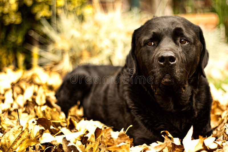 Autumn Fred royalty free stock photo