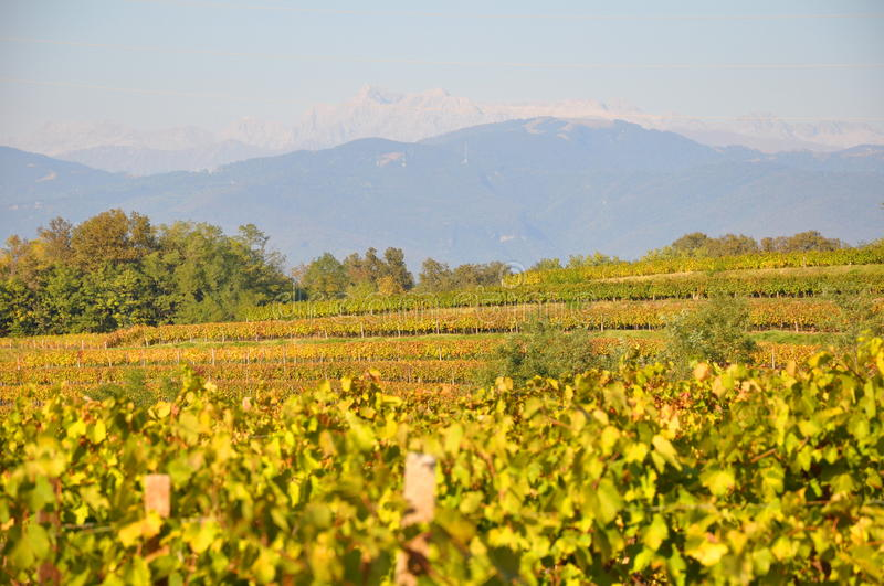 Autumn friuli vineyards italy stock image