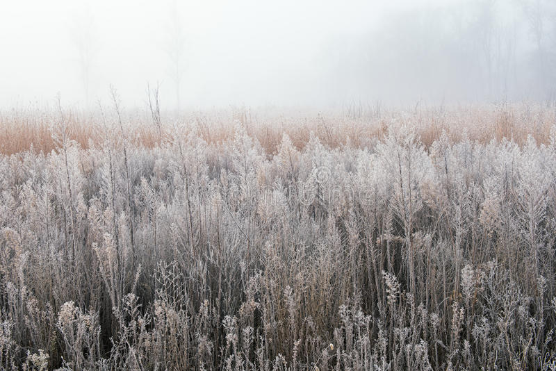 Autumn, Frosted Tall Grass Prairie stock images