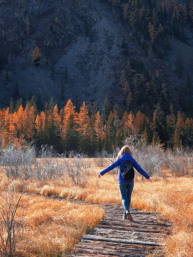 In the autumn frosty season, a young athletic girl walks on a wooden path over the water in a beautiful field with yellow grass. royalty free stock image