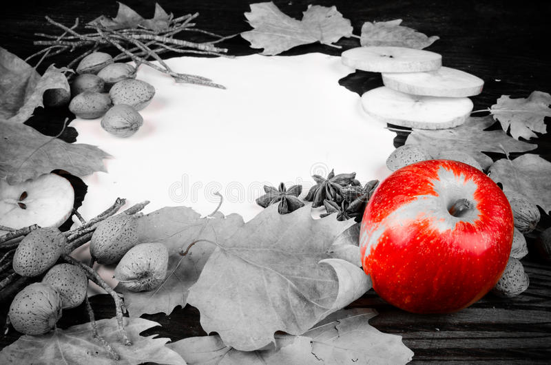 Autumn fruit in black and white royalty free stock photography
