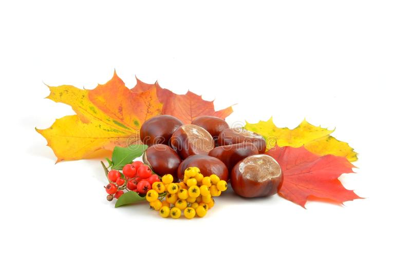 Autumn fruit and chestnut. stock images