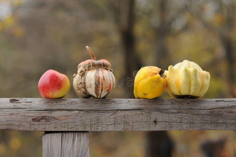 Autumn Fruits arkivbild