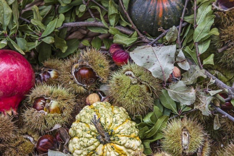 Autumn Fruits imagen de archivo